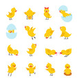 cute chicks cartoon easter baby chickens vector image vector image