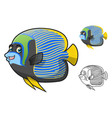 Emperor Angelfish vector image