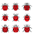 lady bugs vector image