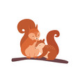 squirrel with baby isolated on white background vector image
