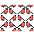 hand sketched pattern with bullfinches vector image
