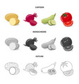 vegetable and fruit icon vector image vector image