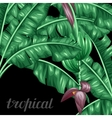 background with banana leaves decorative image