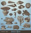 coral reef vector image vector image