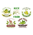 vegetable cereal bean farm emblem set design vector image vector image