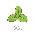 basil line cooking isolated vector image