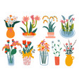 beautiful spring flowers in vases potted plants vector image