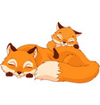 foxes sleeping vector image vector image