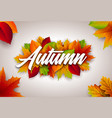 autumn with colorful leaves and vector image vector image