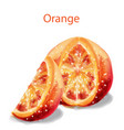 orange slice fruits watercolor isolated on whites vector image vector image