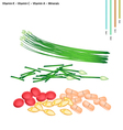 Garlic Chives with Vitamin K C A B9 and Mineral vector image vector image