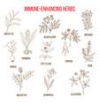 immune enhancing herbs vector image