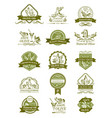 olive icons of for organic olive oil vector image