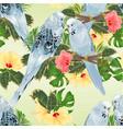 seamless texture birds budgerigars parakeets vector image vector image