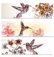 brochures set with hummingbirds and flowers vector image vector image