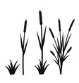 silhouette of grass with inflorescences spike vector image vector image