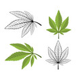 cannabis leaf on a white background vector image