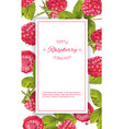 raspberry vertical banner vector image
