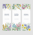 set of vertical banners decorated with blooming vector image vector image