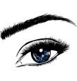 a beautiful blue woman eye vector image vector image
