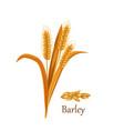 barley grass cereal crops