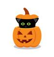 black cat on a halloween pumpkin vector image vector image