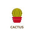 cactus decorative houseplant in pot florist vector image