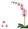 card pink orchid flowers vector image