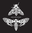 deaths head hawk moths hand drawn dot work vector image