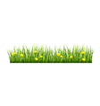 Grass with yellow flowers vector image vector image