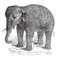 Asian Elephant vintage engraving vector image vector image
