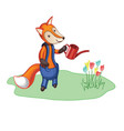 cartoon fox in trousers watering flowers vector image