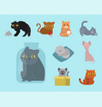 cute cats character different pose funny animal vector image vector image