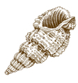 engraving shell vector image vector image