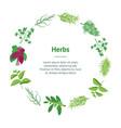 herb banner card circle dill parsley basil mint vector image vector image