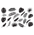 palm leaves silhouettes tropical leaf monstera vector image