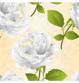 seamless texture flower white rose vector image