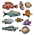 Set of fishes isolated vector image