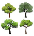 trees realistic nature garden botanical vector image vector image