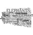 what you have in common with elephants text word vector image vector image