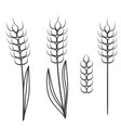 wheat ears scretch isolated on white stock vector image