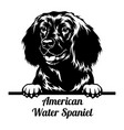 peeking dog - american water spaniel breed - head vector image vector image