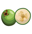 cartoon of green raw fig half a fig on white vector image