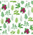 herb seamless pattern background vector image