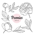 set monochrome black and white peony vector image