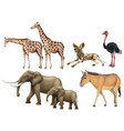 five types of wild animals vector image