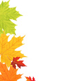 Color Leaves Border vector image