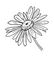 daisy flower sketch on white background vector image
