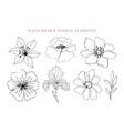 floral elements set botanical drawings vector image