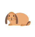 little domestic lop-eared rabbit or bunny funny vector image vector image
